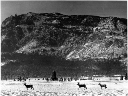 [Deer by Cheyenne Mountain] by Fred Baker, date unknown. Courtesy of Special Collections, Pikes Peak Library District. Image Number: 001-4115.