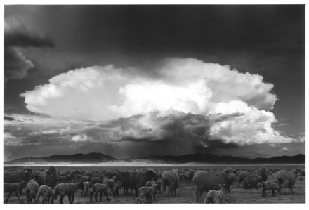 """Sheep, Storm. South Park, Colorado."" Myron Wood, 1967. Courtesy of Special Collections, Pikes Peak Library District. Image Number: 002-1269."