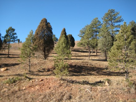 The same area after treatment by mitigation team. Photo: Courtesy of Colorado Springs Fire Department