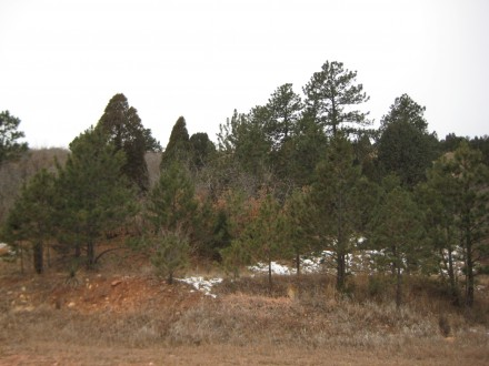 An area in Colorado Springs before wildfire mitigation treatment. Photo: Courtesy Colorado Springs Fire Department